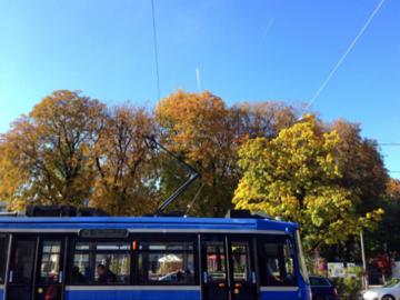 10月上旬の公園の木とドイツの市電