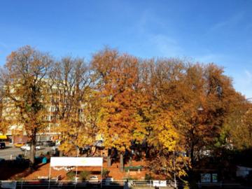 10月下旬の公園の木の様子