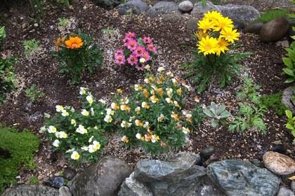 ビオラとガザニアの花壇